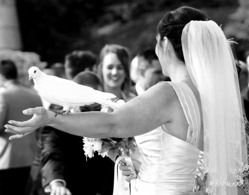 IOW Wedding Phootgrapher (2)